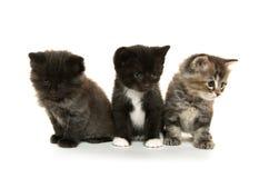 Tre gulliga kattungar på vit Arkivbilder