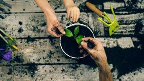 Tre händer rymmer ett blad av blommanärbilden Begreppet av att arbeta i trädgården arkivfilmer