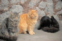 Tre härliga fluffiga hemlösa katter royaltyfri foto