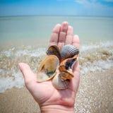 Tre härliga marin- skal i mänsklig hand och ljus blå himmel på stranden Härligt skal i en manlig hand, en sand och ett ljust hav Royaltyfria Bilder
