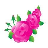 Tre härliga rosa rosor Royaltyfri Fotografi