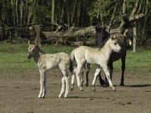 Tre hästar Arkivbild