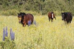Tre hästar i ängen med trädgårdlupin i förgrund royaltyfri fotografi