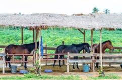 Tre hästar i ett stall Royaltyfria Foton