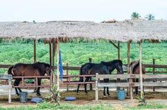 Tre hästar i ett stall Royaltyfri Bild