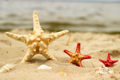 Tre havsstjärnor i närbild för gul och röd färg av olika format ligger på sandbakgrunden Royaltyfri Foto