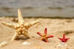 Tre havsstjärnor i närbild för gul och röd färg av olika format ligger på sandbakgrunden Arkivfoto