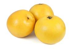 Tre hela grapefrukter på vit bakgrund Arkivbild