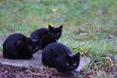 Tre hemlösa lilla svarta katter sitter på gatan och frysningen royaltyfri bild