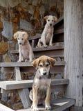 Tre hundkapplöpning på trappan Royaltyfria Foton
