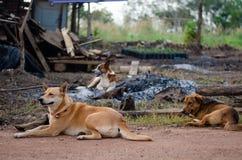 Tre hundkapplöpning som ligger på sidan av en väg royaltyfria bilder