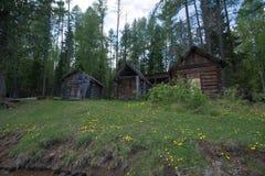 Tre hus i grön skog Royaltyfri Foto
