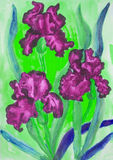 Tre iridi cremisi, acquerello Fotografia Stock Libera da Diritti