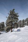 Tre isolati sui pendii slowy delle alpi austriache Immagini Stock