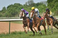 Tre jockey på hästrygg Hästkapplöpning 22 Augusti 2015 Magdeburg, Tyskland arkivfoton