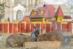 Tre kaniner i den deras slotten Royaltyfria Foton