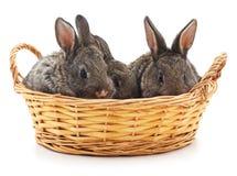 Tre kaniner i en korg royaltyfria bilder