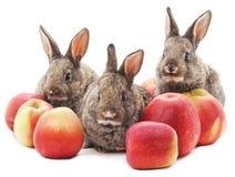 Tre kaniner med äpplen Royaltyfria Foton