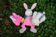 Tre kaniner, mjuka leksaker, på gräset i trädgården En kaninavverkning arkivfoto