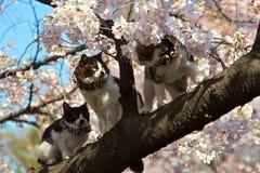 Tre katter Fotografering för Bildbyråer