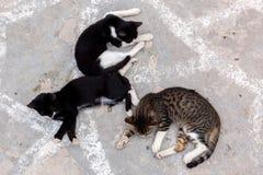 Tre katter Royaltyfria Bilder