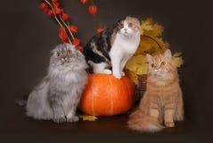 Tre katter i höststillebenet. Arkivfoto