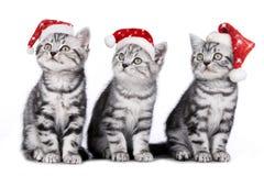 Tre katter på jul Arkivfoton