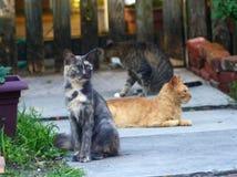 Tre katter Sit Outdoors Arkivbild