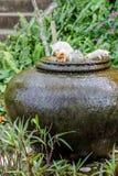 Tre katter som är keramiska på lergodsspringbrunnkruset royaltyfri fotografi