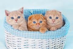 Tre kattungar Arkivbilder