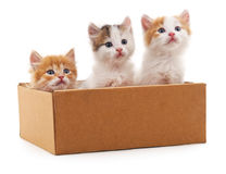 Tre kattungar i en ask Royaltyfria Foton