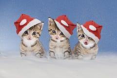 Tre kattungar med julhattar som sitter i snö Arkivbilder