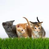 Tre kattungar som står bak högväxt gräs med av en vit royaltyfri bild