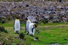 Tre konung Penguins p? den Fortuna fj?rden royaltyfri fotografi