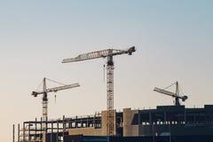 Tre kranar på konstruktionsplatsen i soluppgångljus Arkivbild