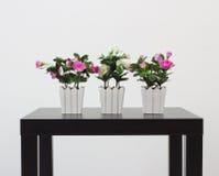 Tre krukor med hemlagade blommor Arkivfoto