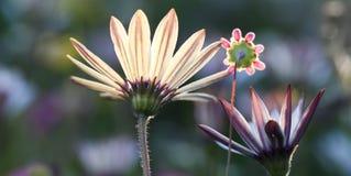 Tre lösa blommor Arkivbild