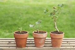 Tre lade in växter Royaltyfri Fotografi