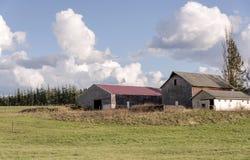 Tre ladugårdar och fält i lantliga Oregon Royaltyfria Foton