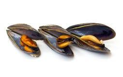 Tre lagade mat musslor Arkivfoton