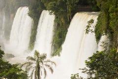 Tre le cascate di Iguazu con circondare verde della foresta immagini stock