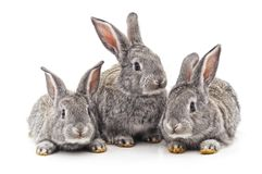 Tre lilla kaniner fotografering för bildbyråer