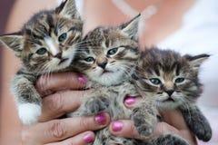 Tre lilla kattungar Arkivbilder