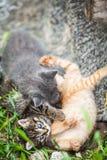 Tre lilla kattungar som spelar i ett gräs arkivbilder