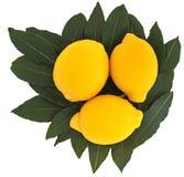 Tre limoni Fotografie Stock Libere da Diritti