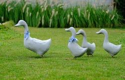 Tre lite ducklings och fostrar anden royaltyfri bild