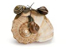 Tre lumache e conchiglie del mare Immagini Stock