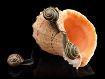 Tre lumache e conchiglie del mare Fotografia Stock Libera da Diritti