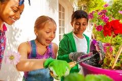 Tre lyckliga vänner som tar omsorg av blommaväxter royaltyfria foton