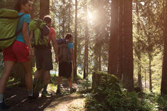 Tre man och kvinna som promenerar fotvandra slingabanan i skogträn under solig dag Grupp av vänfolksommar arkivbild
